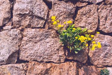 RESILIENCIA: Crecer a partir de la adversidad.